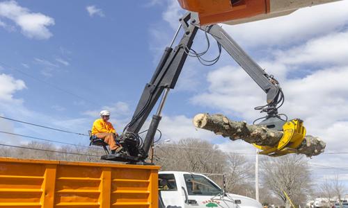 tree removal grapevine